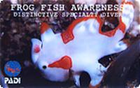 FlogFish.jpg